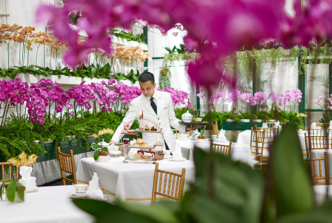v-day afternoon tea 2019 orchid conservatory majestic kl
