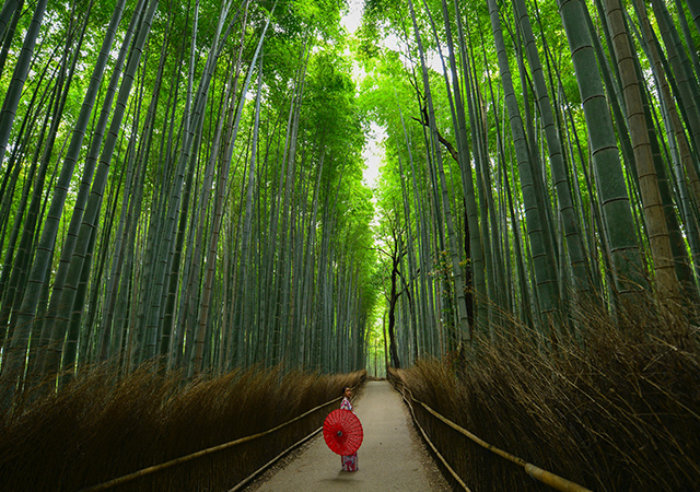 what to do in kyoto on a short trip_bamboo forest
