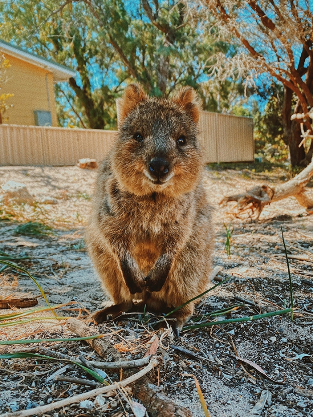 8 Amazing things you need to do in Perth, Western Australia